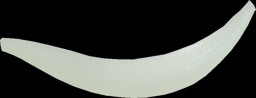 タマネギ|商用可フリー画像・背景透過