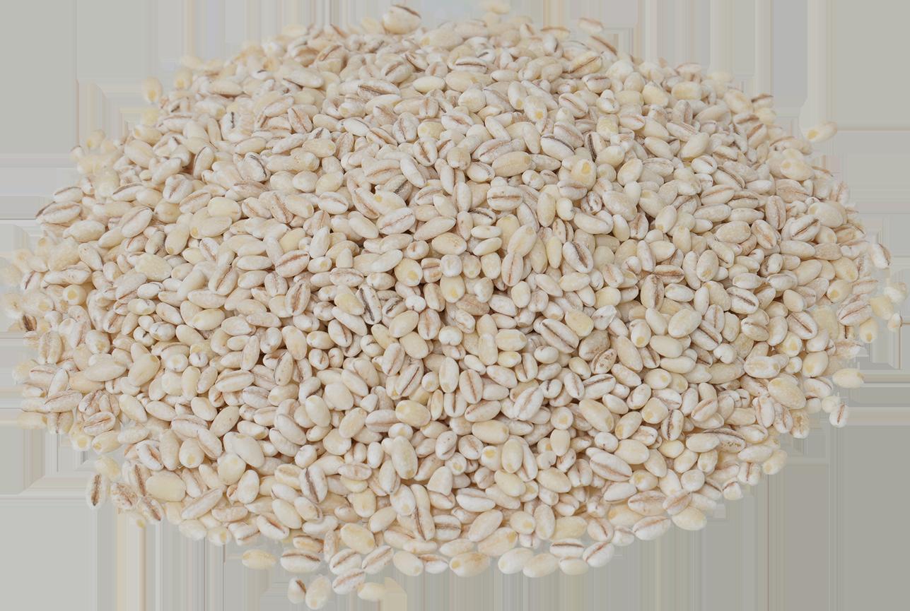 もち麦 商用可フリー画像・背景透過